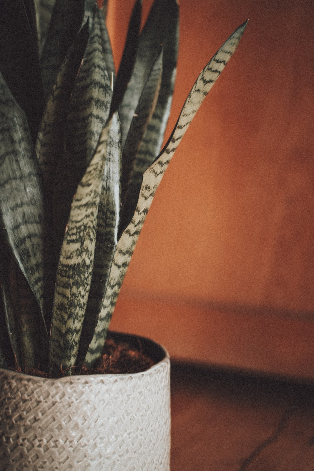 green cactus plant in brown pot