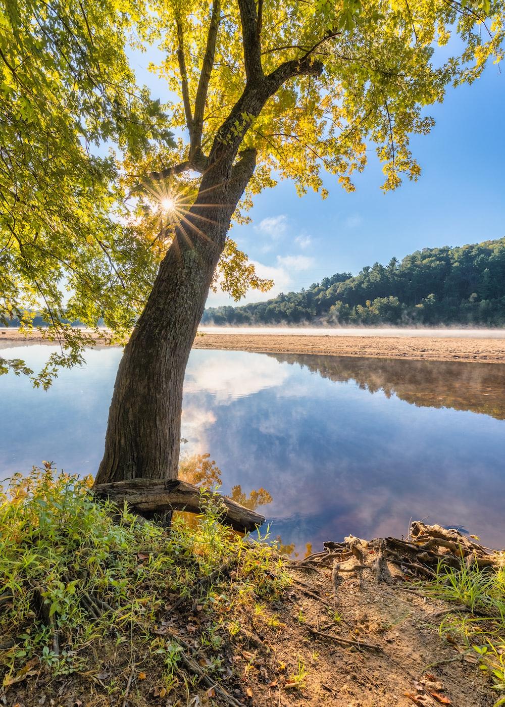 green trees near lake during daytime