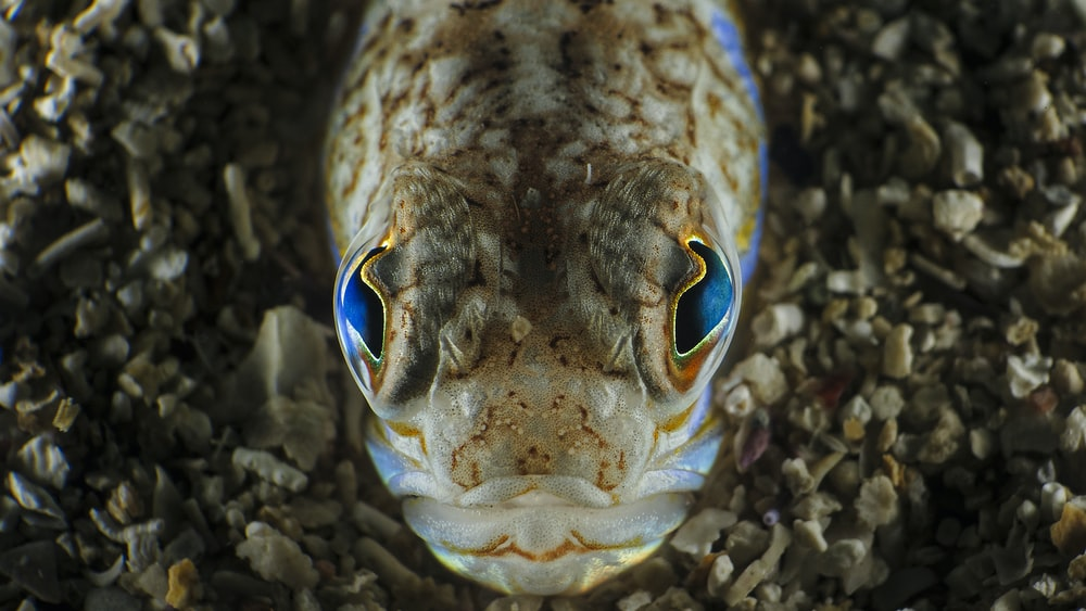 white and blue fish in close up photography
