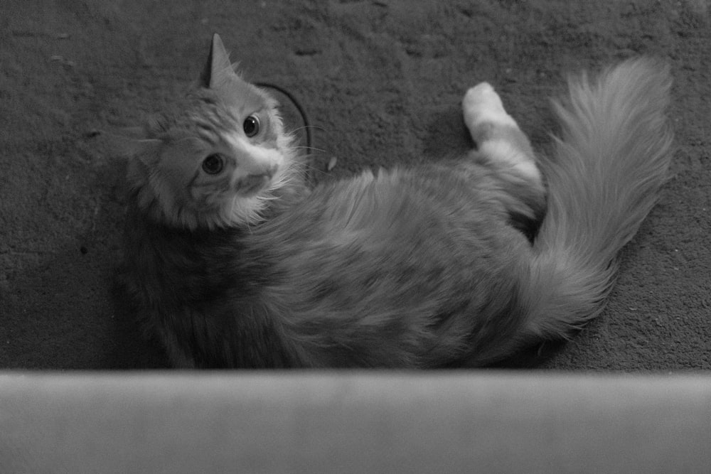 grayscale photo of cat in cage