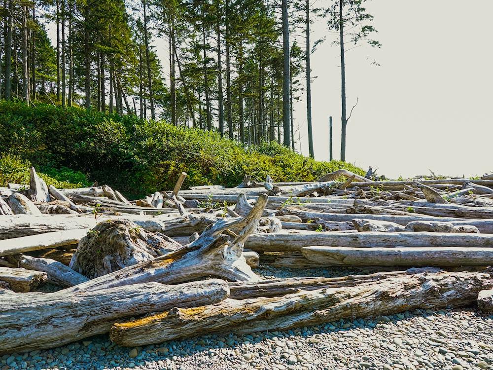 brown wood log on white sand