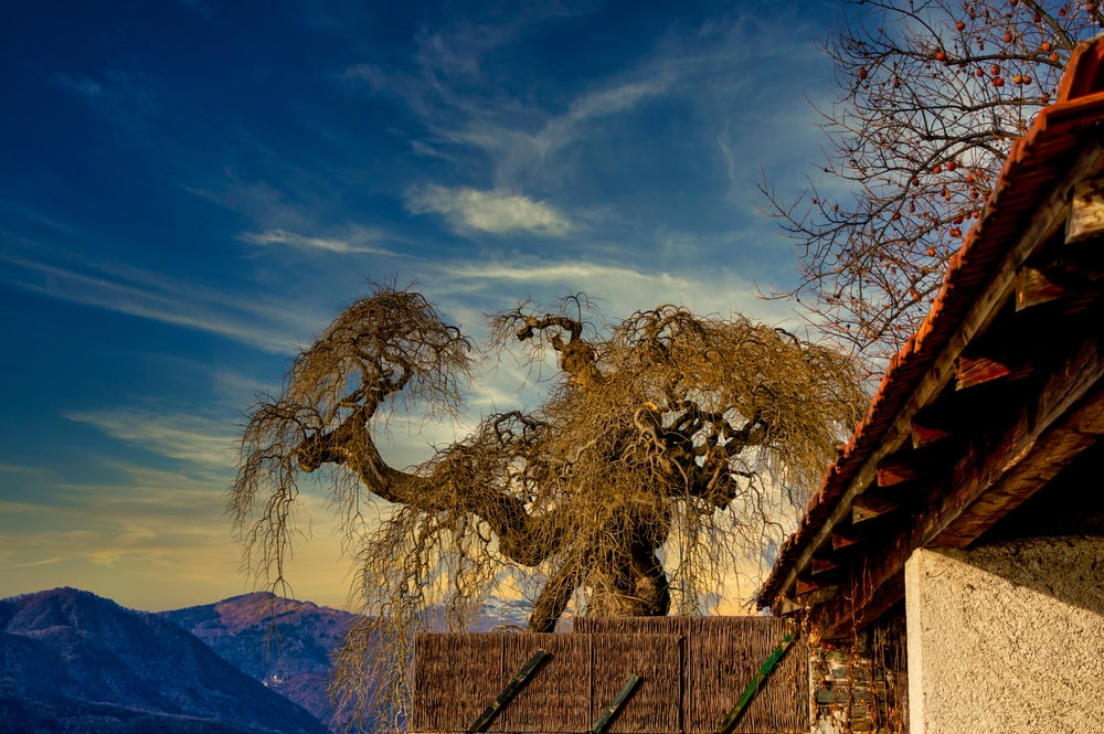 leafless tree near mountain under blue sky during daytime