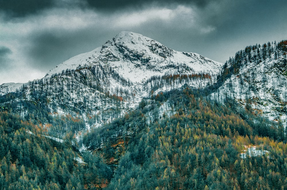 green trees near snow covered mountain during daytime