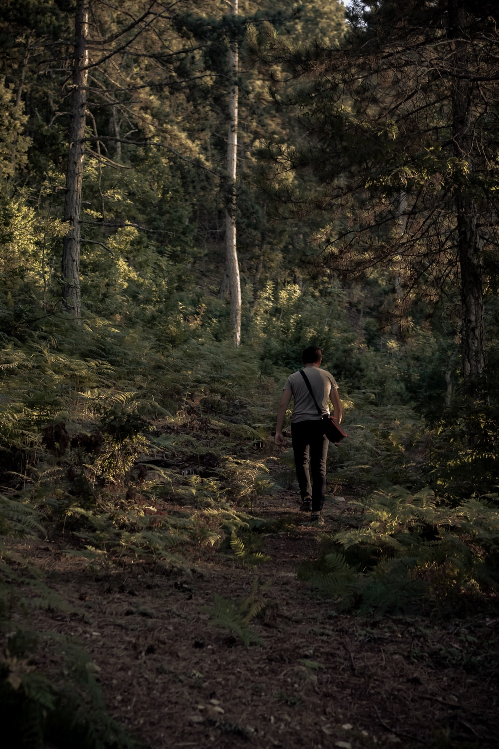 man in white t-shirt walking on forest during daytime