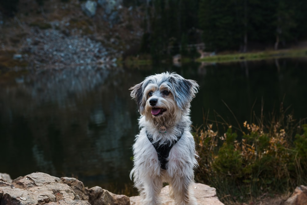 white and brown long coated small dog on brown rock
