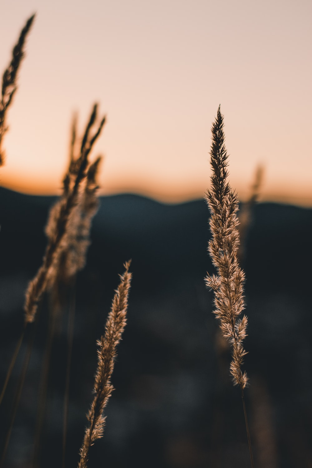 brown plant during golden hour
