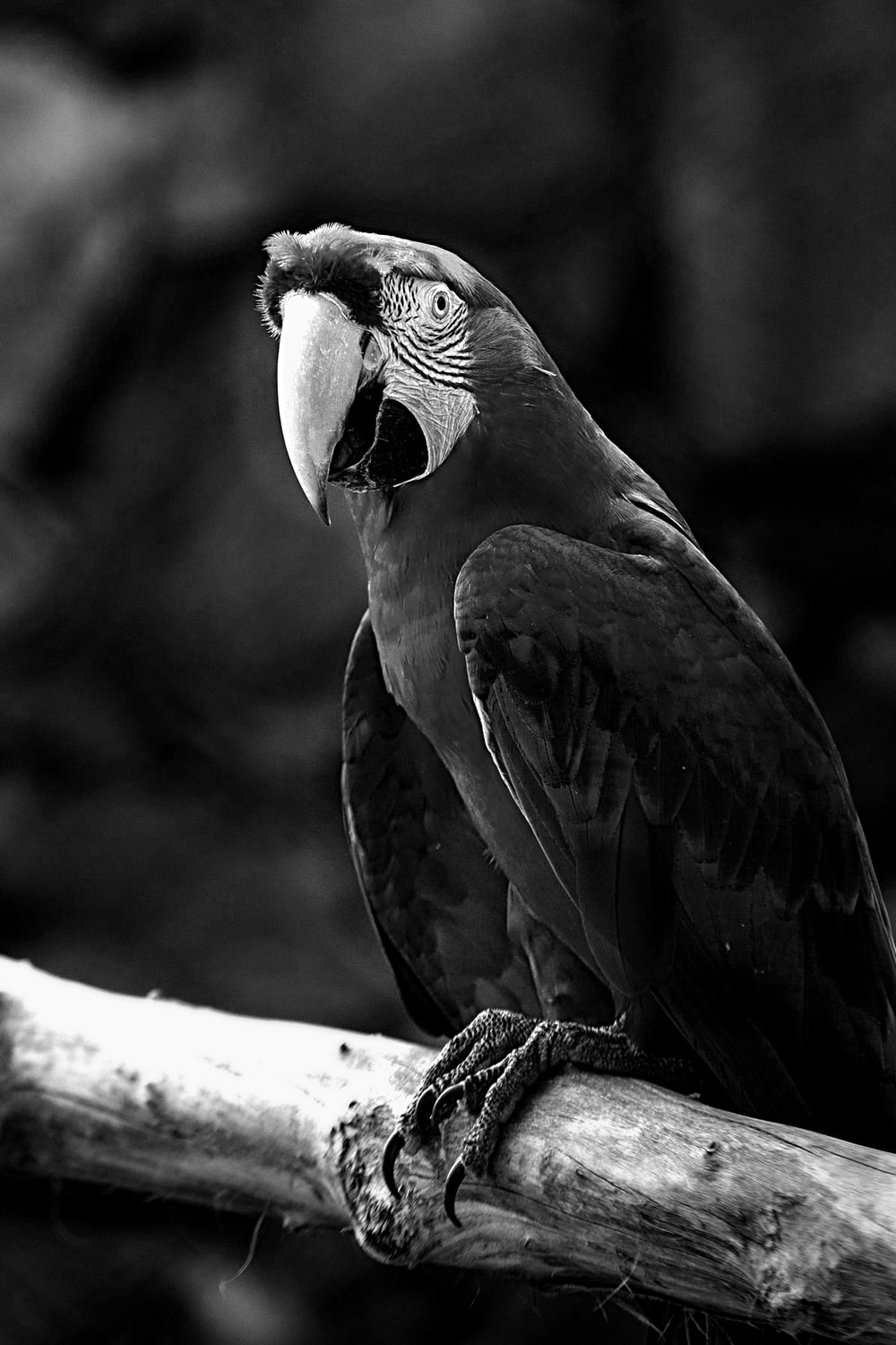grayscale photo of parrot on tree branch
