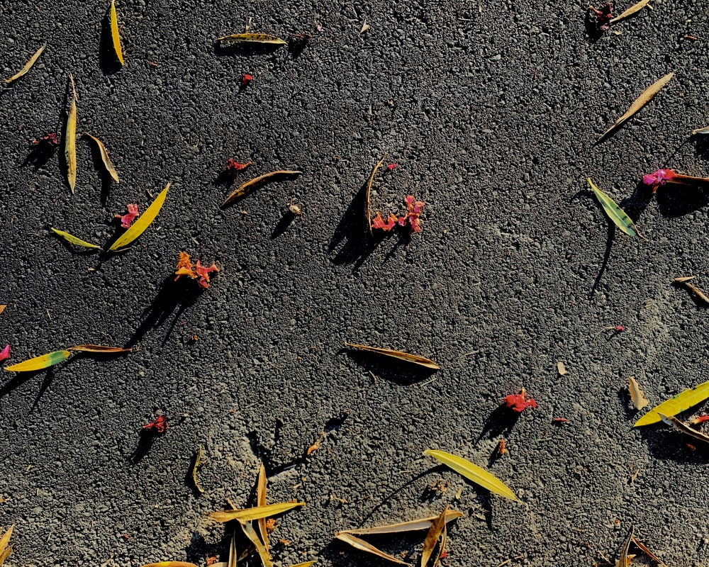 red and yellow leaves on gray concrete floor
