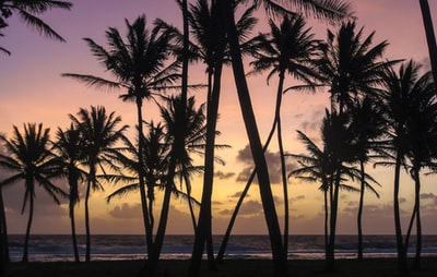 silhouette of palm trees during sunset marshall islands zoom background