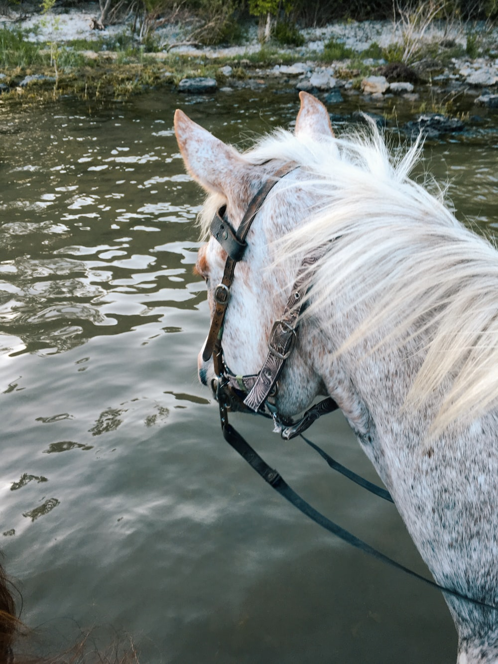 white horse on water during daytime