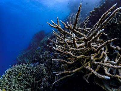 brown coral reef under water great barrier reef zoom background