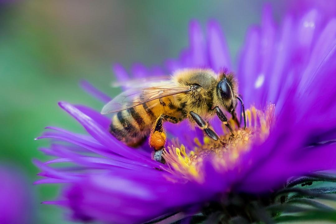 Bee Gathering Nectar - unsplash