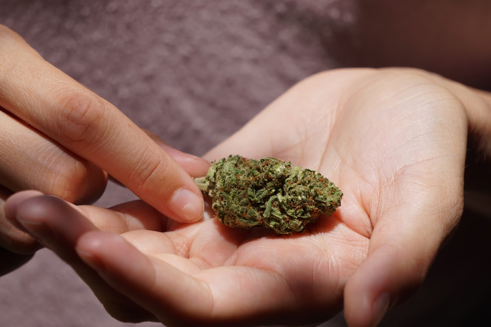 green kush on persons hand