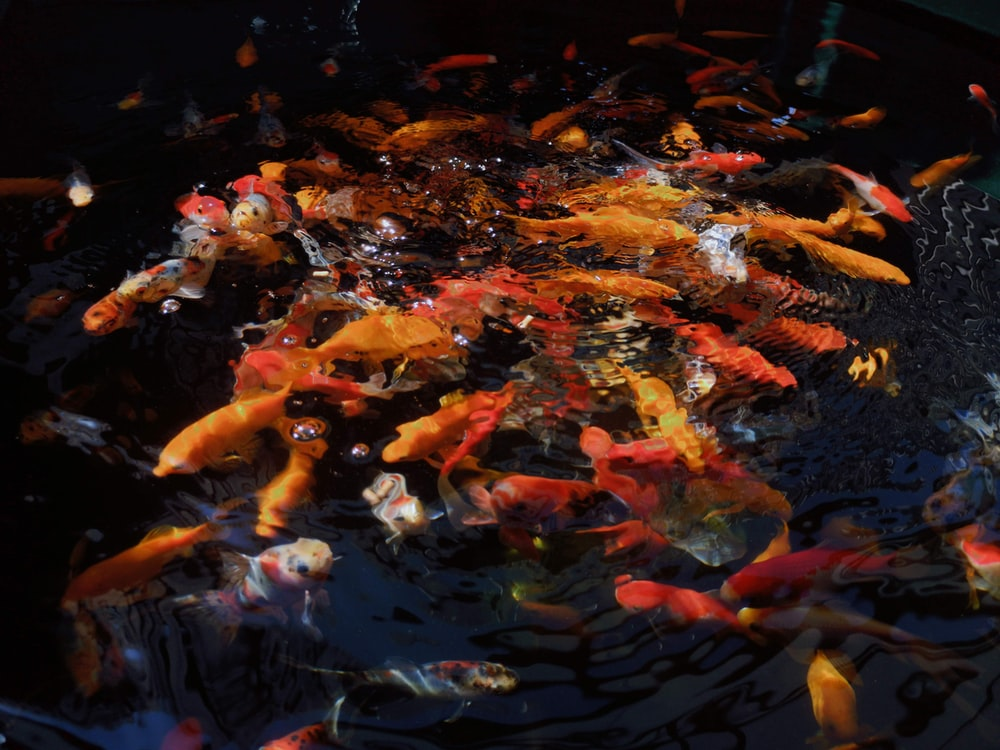 people in a school of fishes