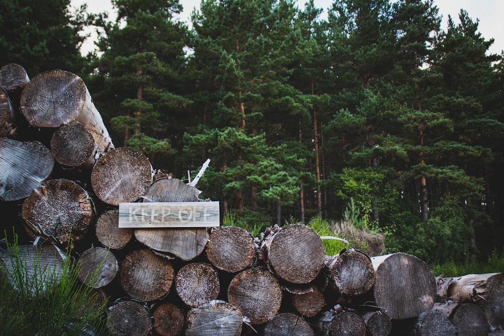 brown wood log on gray rock