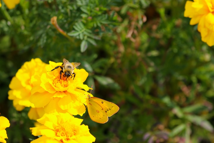 The Tale of the Honey Bee and the Butterfly