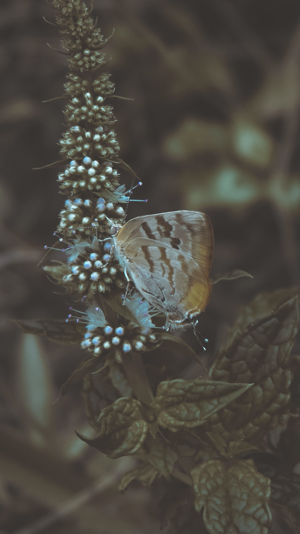 brown and white butterfly perched on blue flower in close up photography during daytime