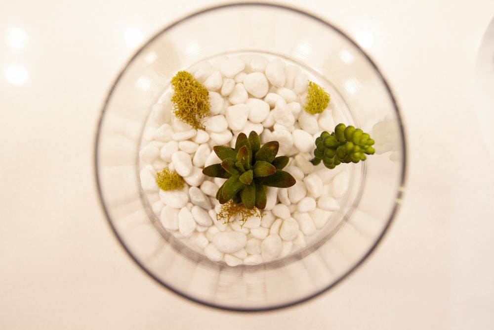 white flower buds in clear glass bowl