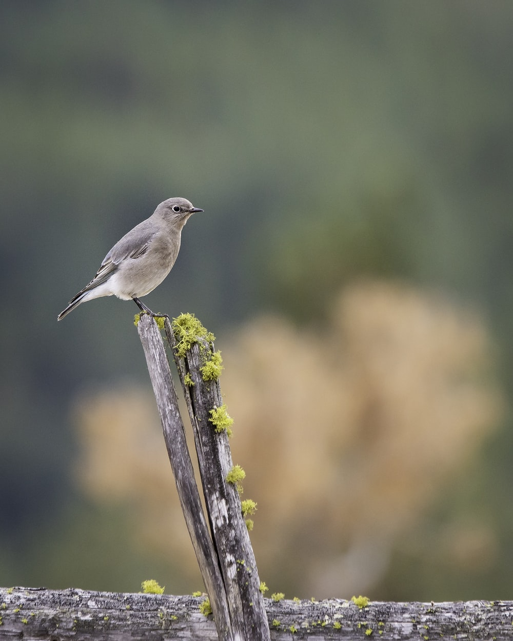 gray bird perched on brown wooden fence during daytime