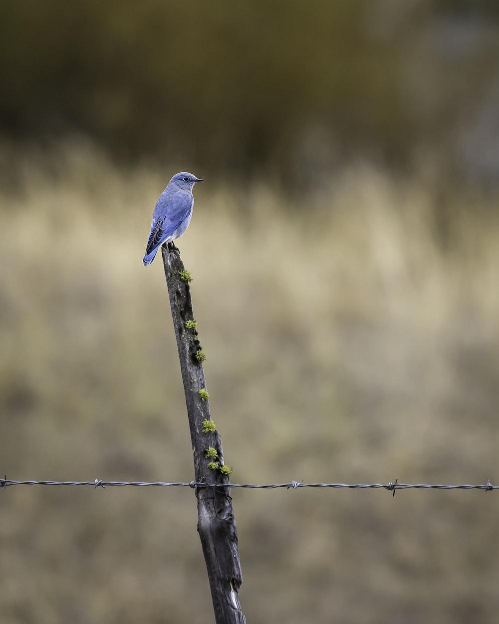 brown bird on brown wooden stick during daytime