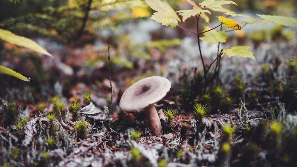 white mushroom on brown dried leaves