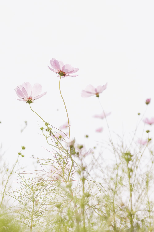 pink flower in green grass