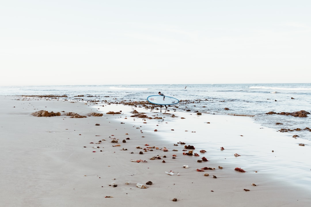 White and Black Bird On Beach During Daytime - unsplash