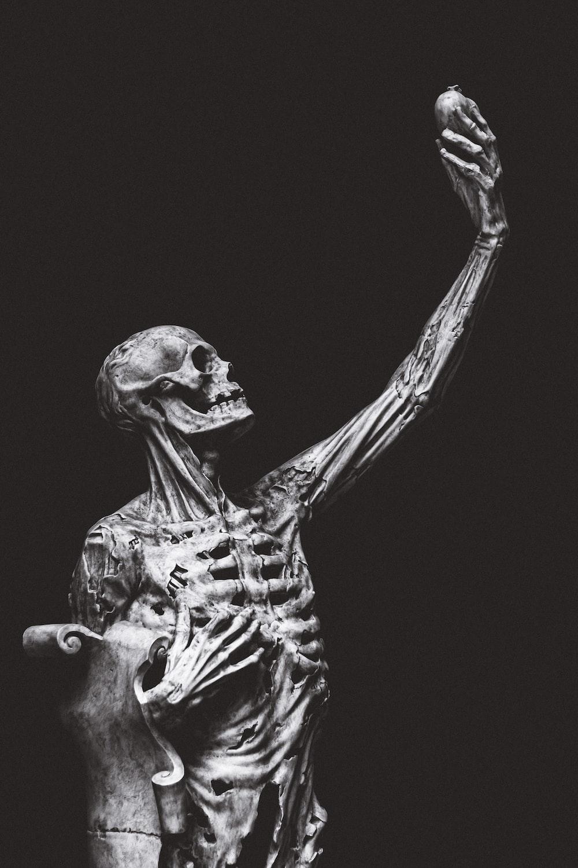 black and white animal skeleton