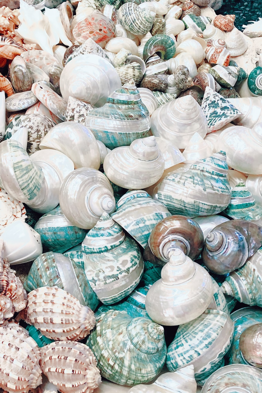 white and brown seashell lot