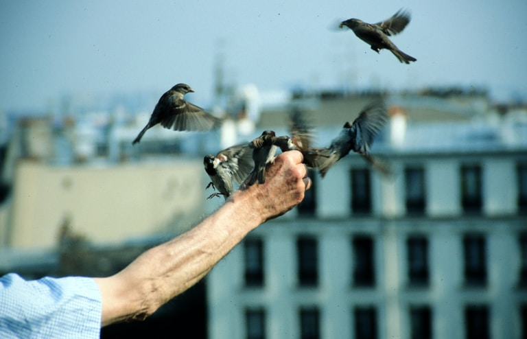 French man feeding sparrows in Mont Martre, Paris, 1985