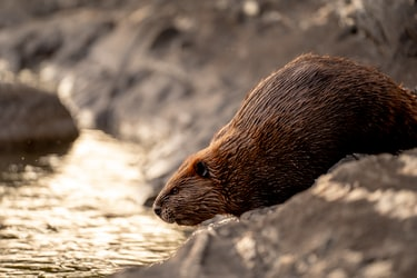 Diversity of Life at a Beaver Pond