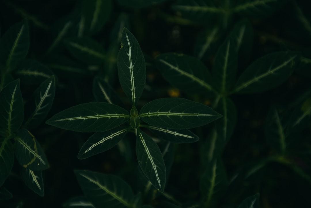 Just A Wallpaperfriendly Plant - unsplash