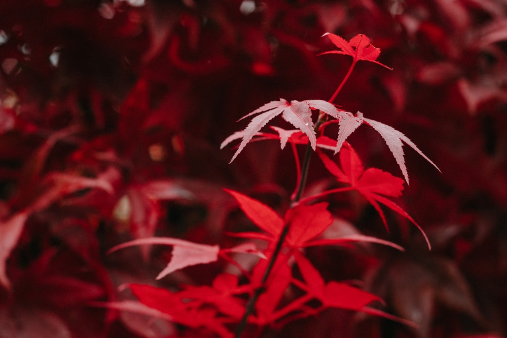 red and white plant in close up photography