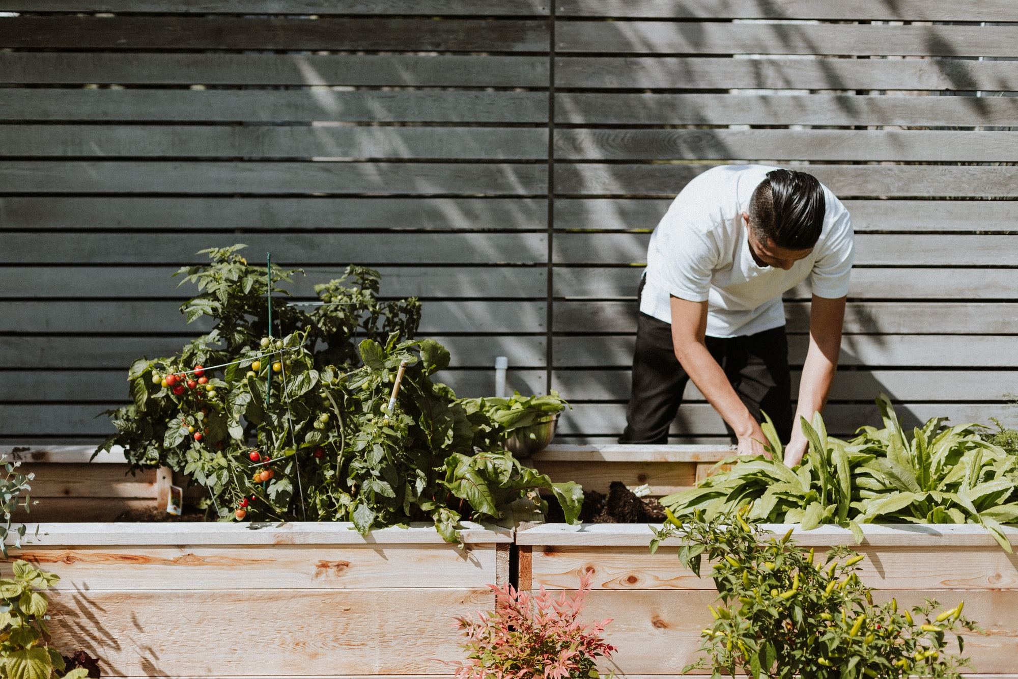 How guerilla gardening helps solve food deserts