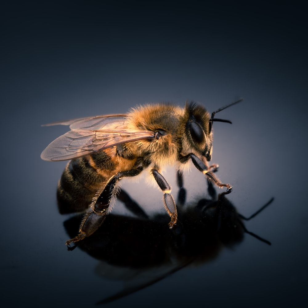 black and yellow bee in close up photography