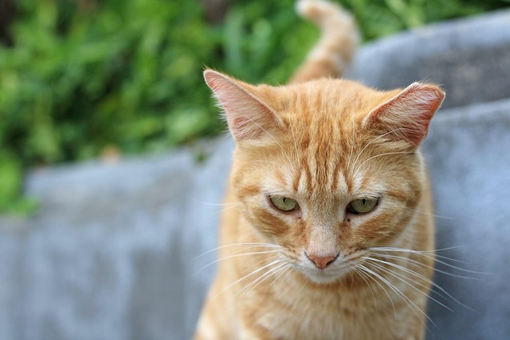 orange tabby cat on gray concrete floor