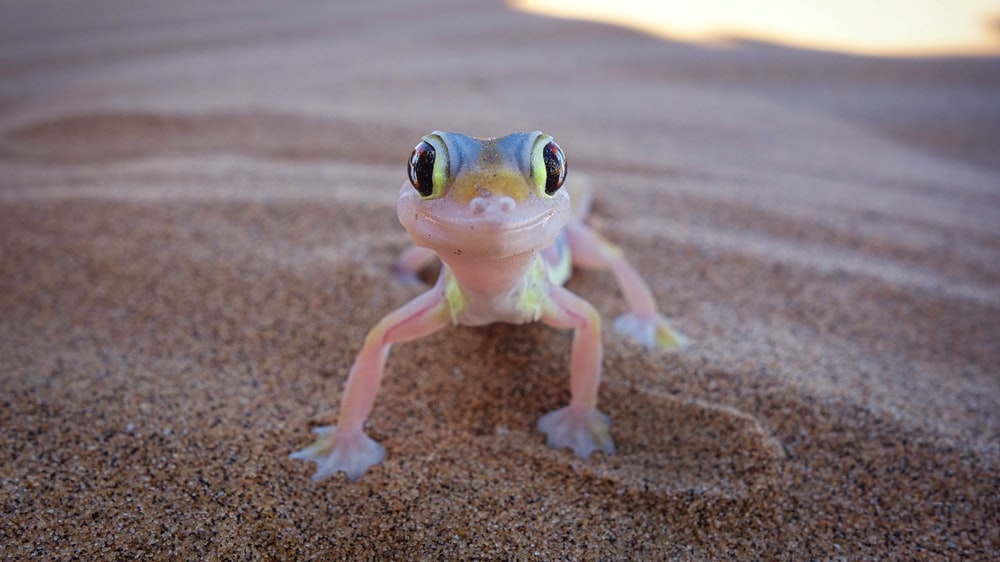 white and green frog figurine on brown sand during daytime
