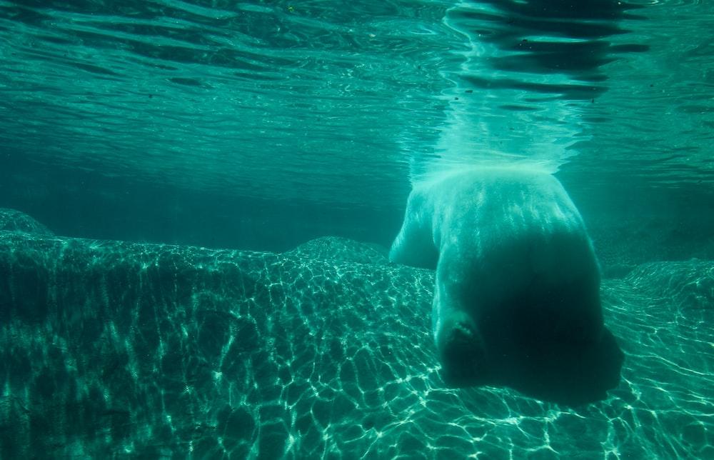 white sea creature in water