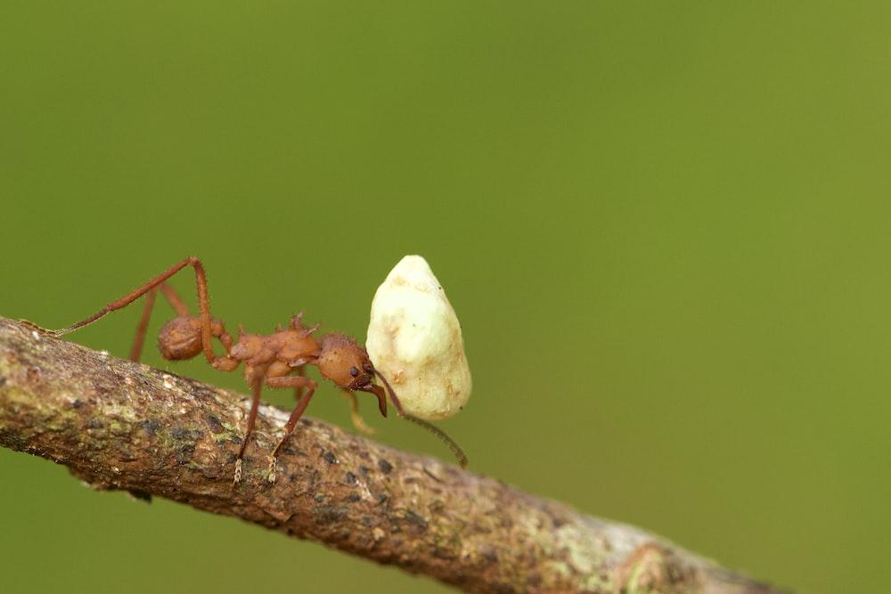 red ant on white mushroom