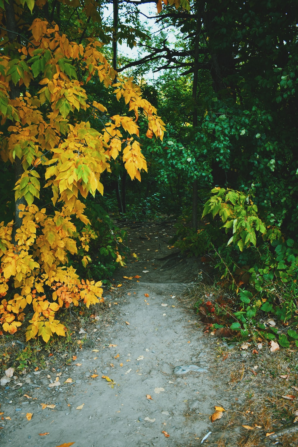 yellow leaves on gray concrete pathway