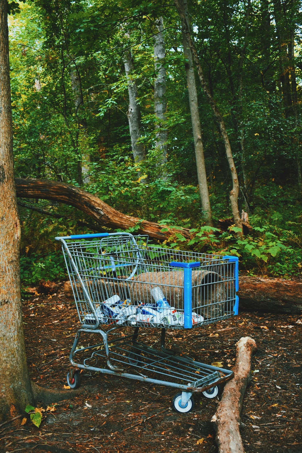 blue shopping cart on forest during daytime
