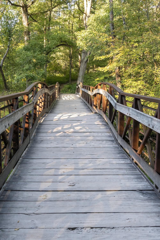 brown wooden bridge in forest during daytime
