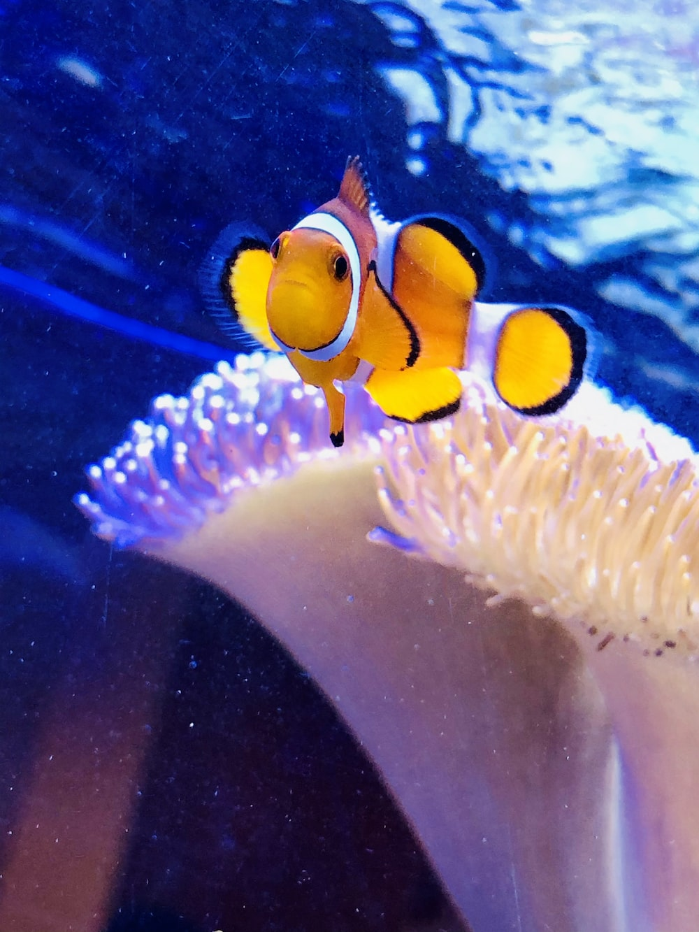 clown fish in water during daytime