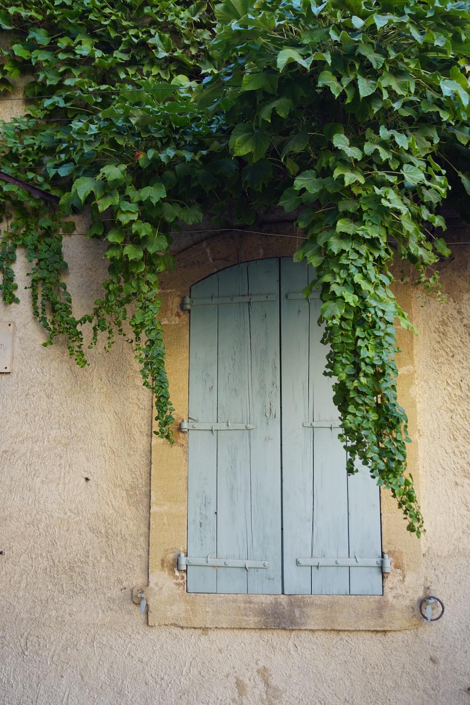 green vines on white wooden door