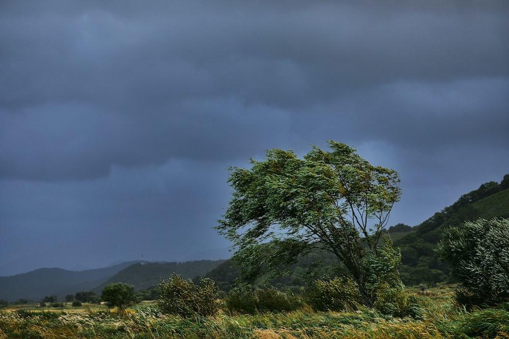 green tree on green grass field under gray sky