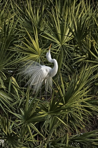 White bird at Gatorland in Orlando Florida
