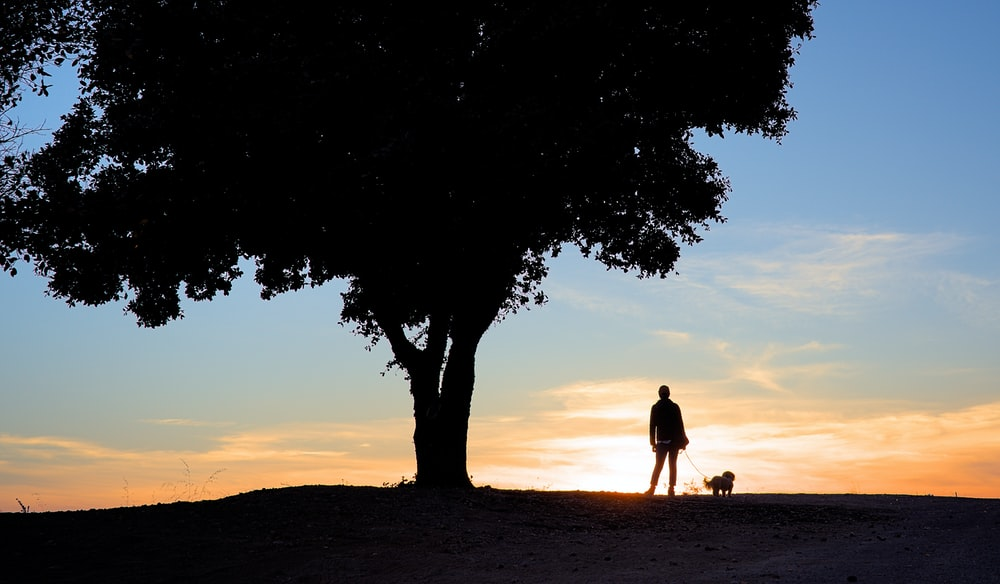 man and woman standing beside tree during sunset