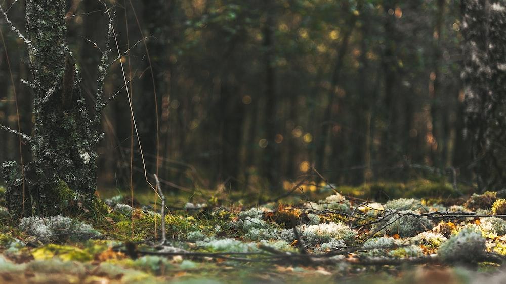 water flowing on brown tree branch