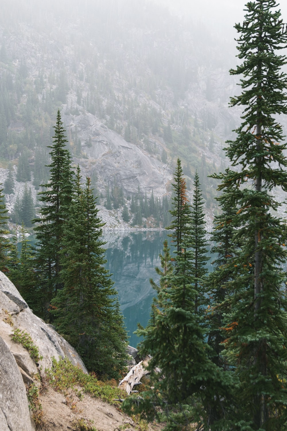 green pine trees on gray rocky mountain during daytime