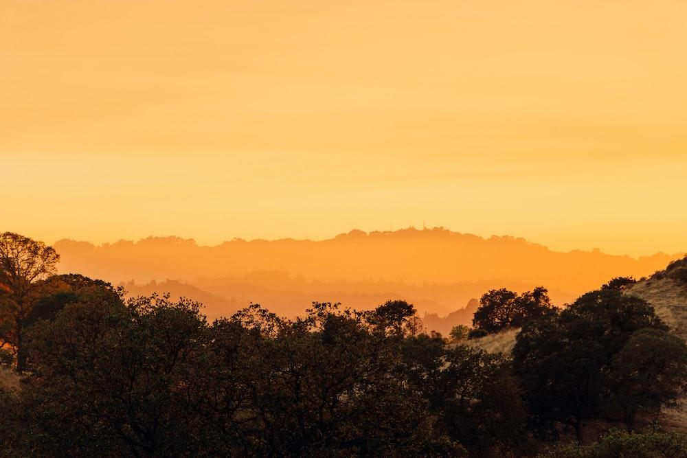 green trees under orange sky during sunset
